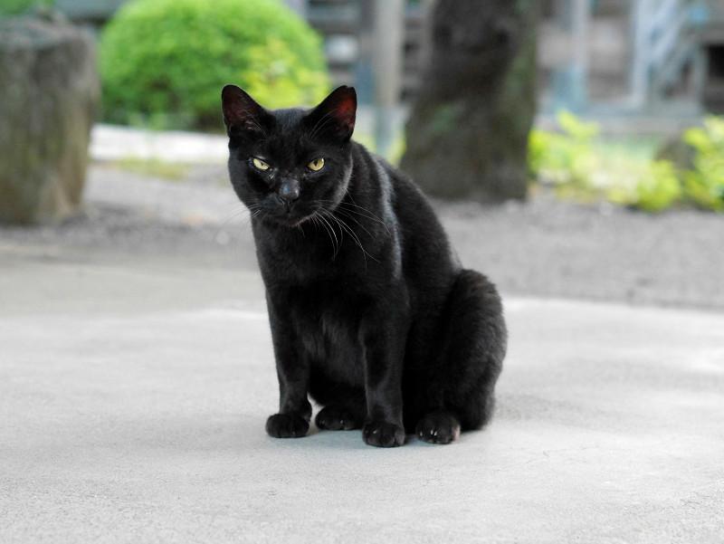 境内と黒猫2