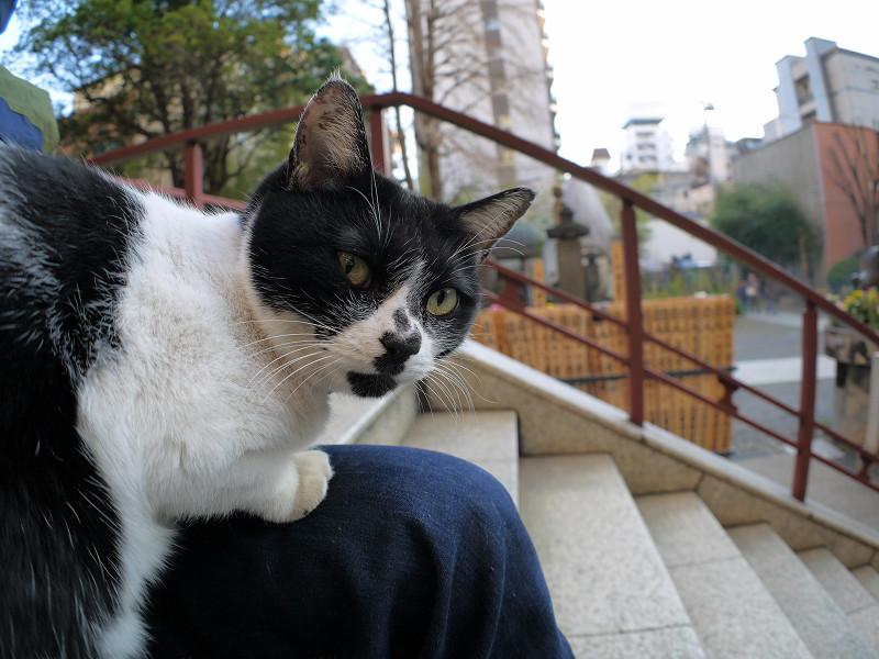眠りから覚めた白黒猫1