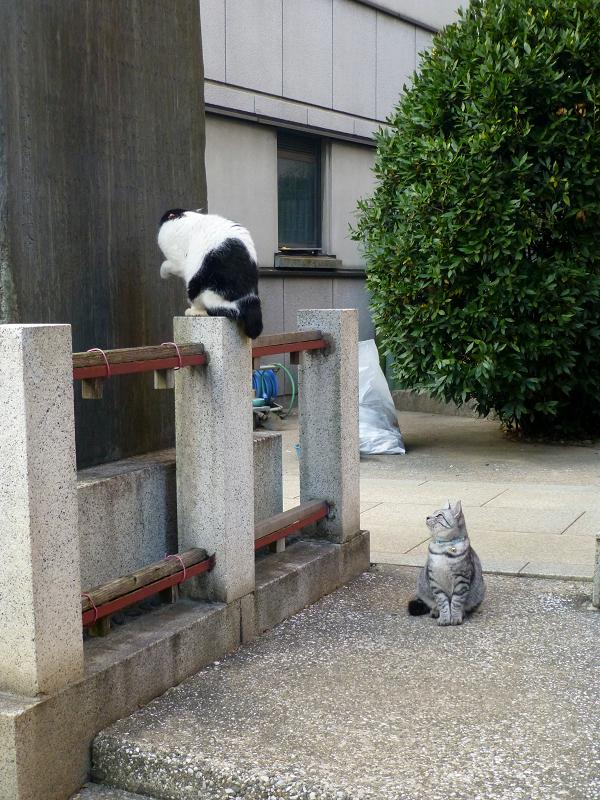 石碑の裏の猫たち1