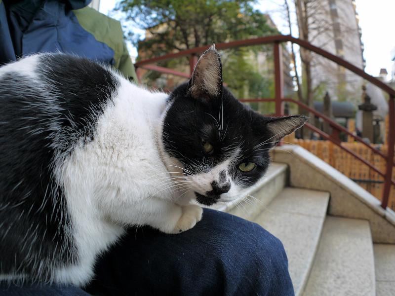 眠りから覚めた白黒猫2