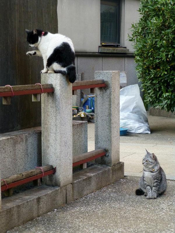 石碑の裏の猫たち2