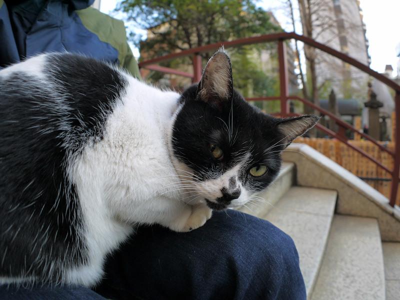 眠りから覚めた白黒猫3
