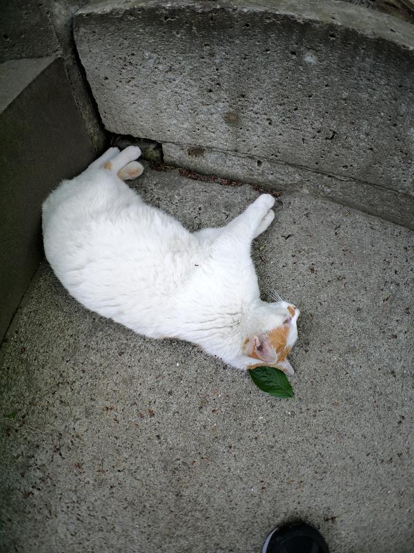 コンクリの壁に足をくっつけている白茶猫1