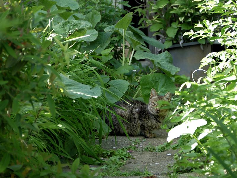 通路奥のサビ柄猫1