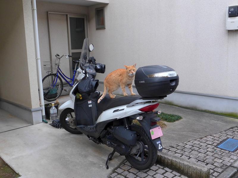 行き止まり民家と茶トラ猫2