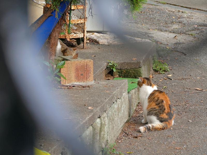 2匹の猫と緊張感2