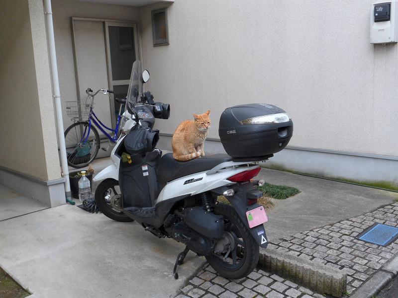 行き止まり民家と茶トラ猫3