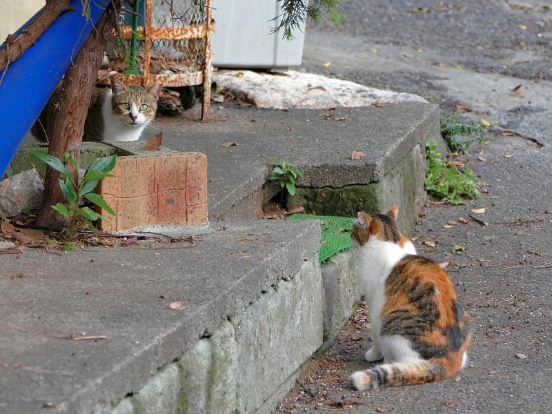 2匹の猫と緊張感3