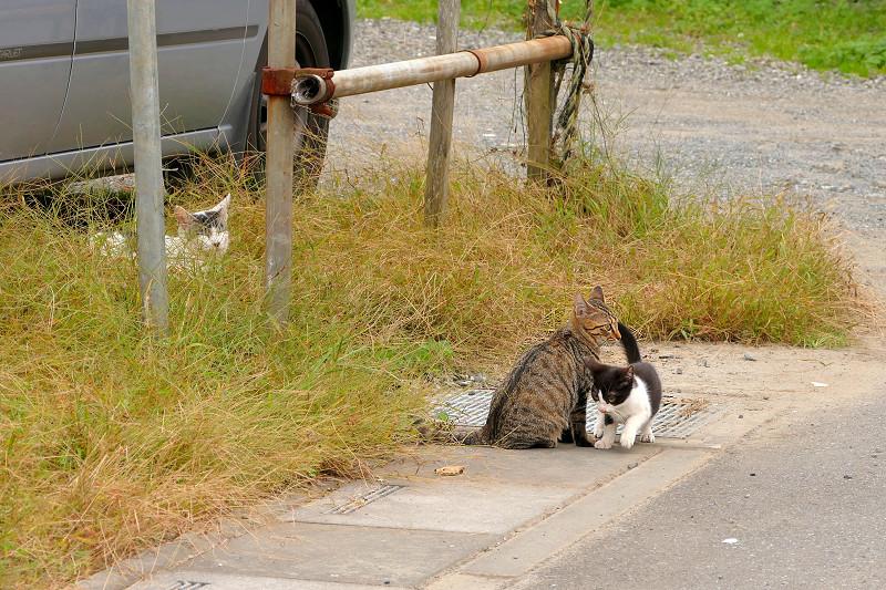 側溝の溝蓋の上の猫たち2