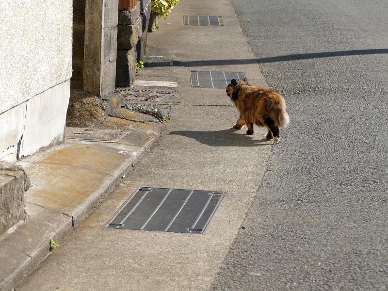 道路を横切る毛長のサビ猫2
