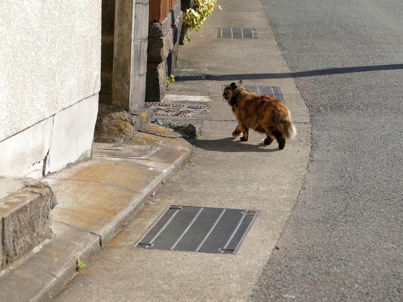 道路を横切る毛長のサビ猫3