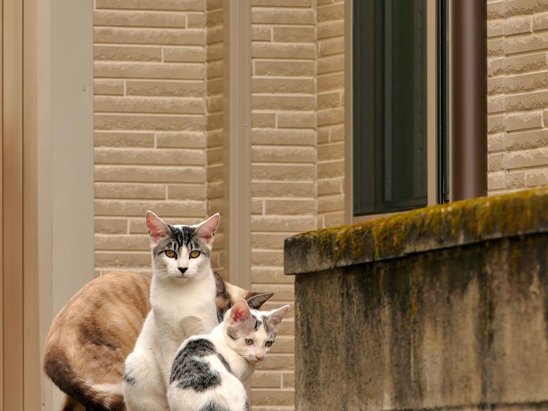 ブロック塀を乗り降りする猫たち4