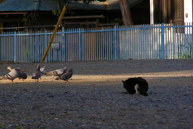 空き地で狩りをする黒白猫1