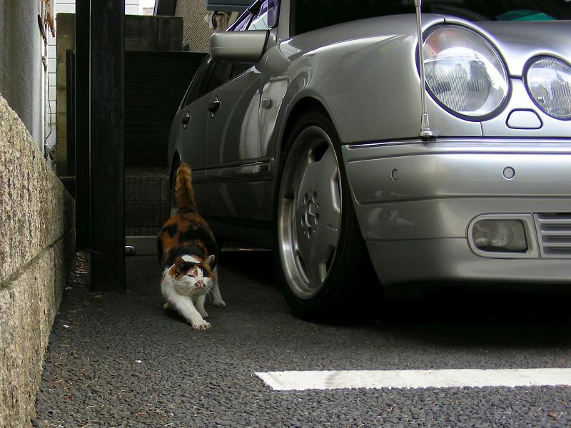 ガレージの三毛猫1