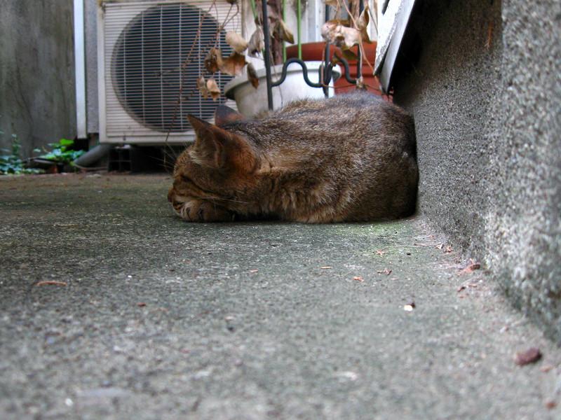 隅っこで寝ていたキジトラ猫1