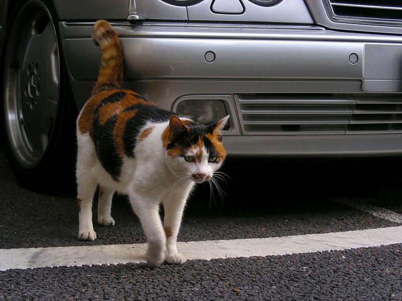 ガレージの三毛猫2