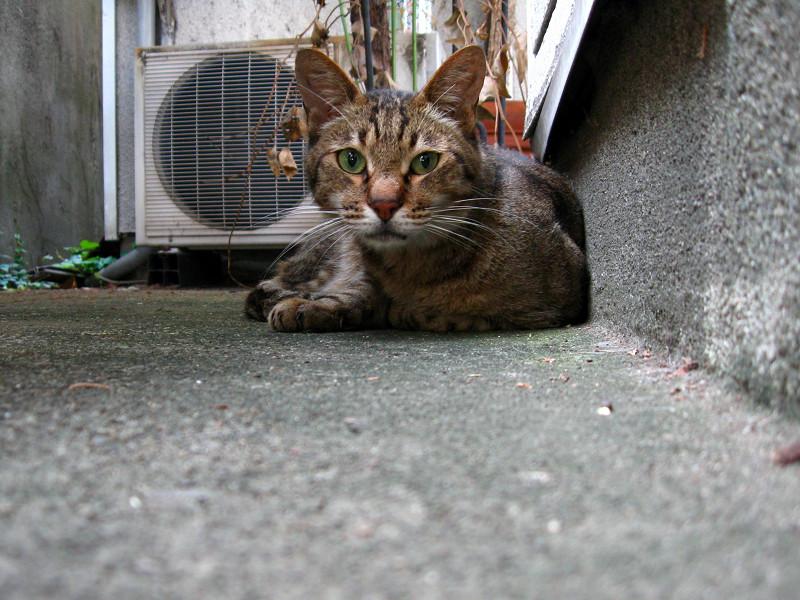 隅っこで寝ていたキジトラ猫2