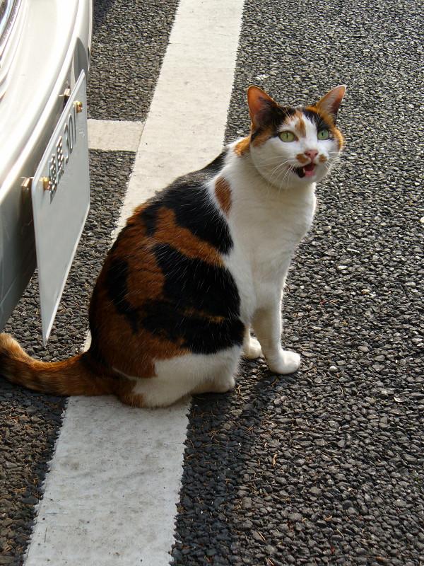ガレージの三毛猫3