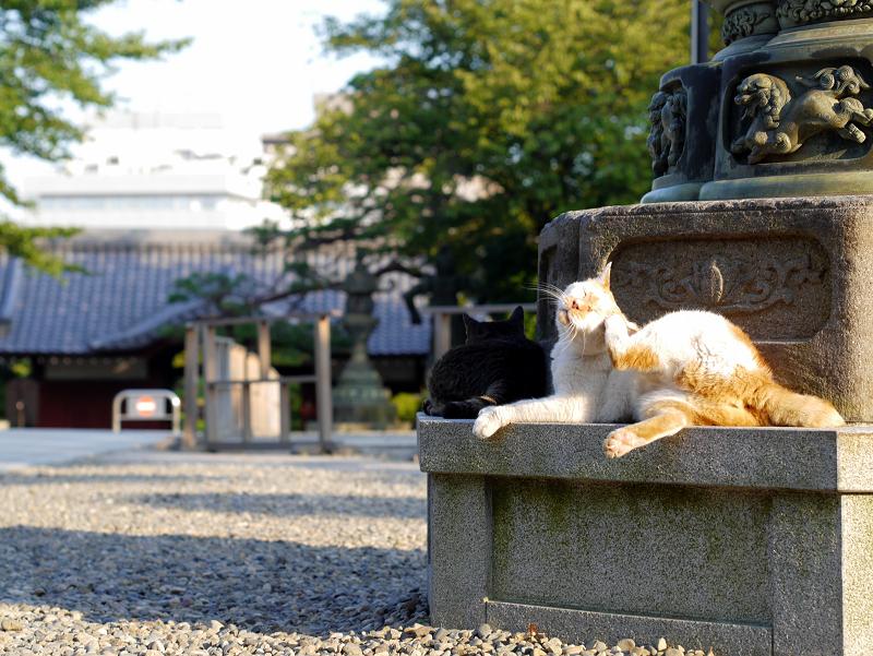 灯籠台座と白茶猫1