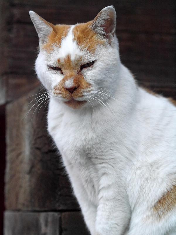 目覚めた白茶猫1