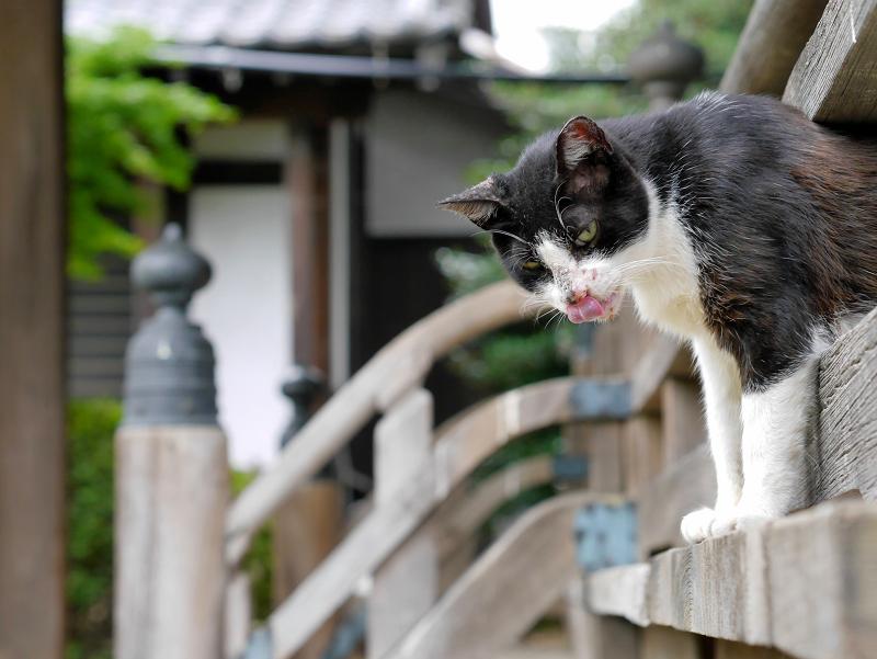 お堂階段欄干の黒白猫2
