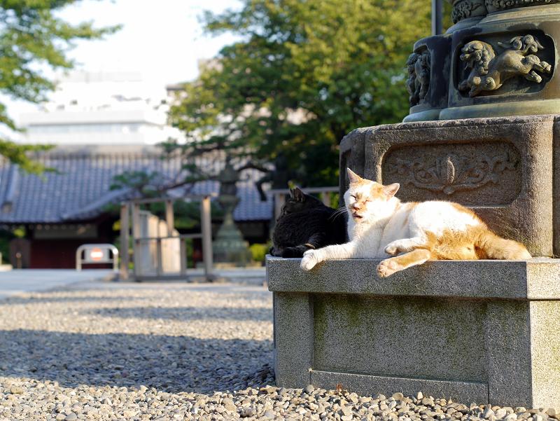 灯籠台座と白茶猫2