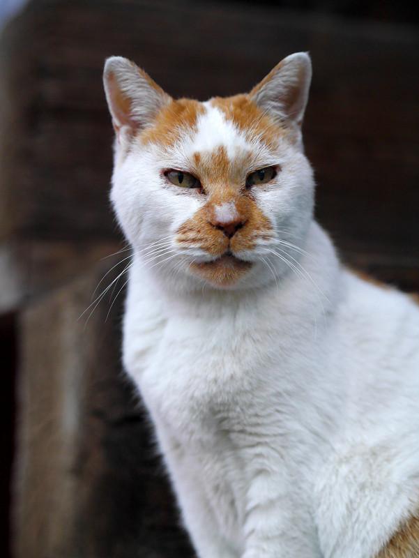 目覚めた白茶猫2
