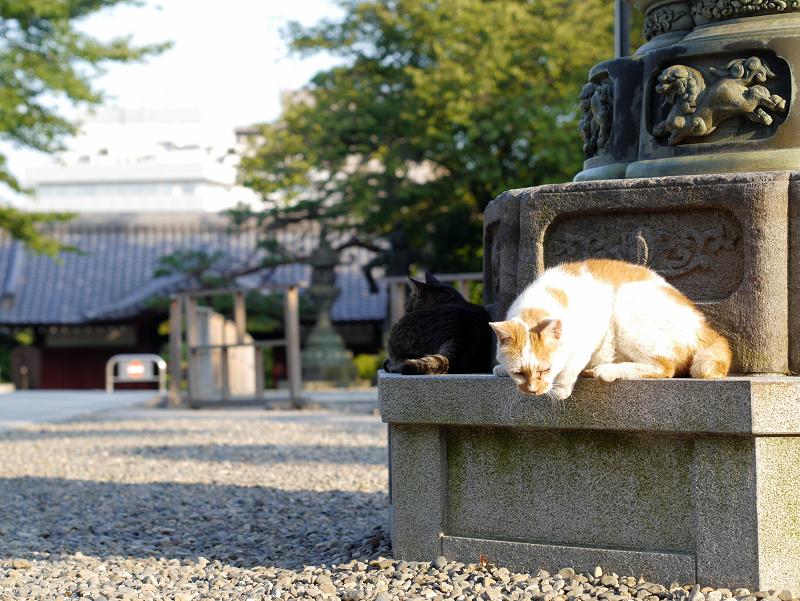 灯籠台座と白茶猫3