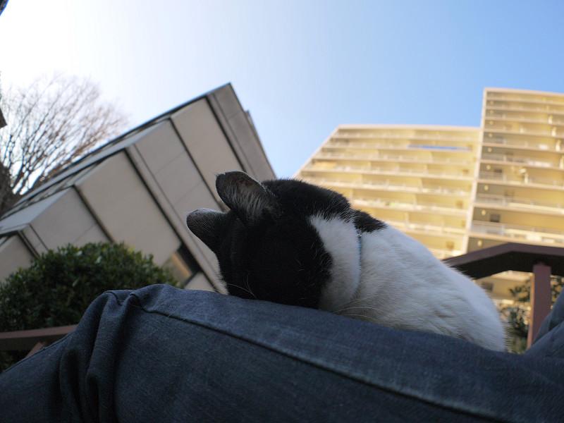 三度ごめん寝の白黒猫1