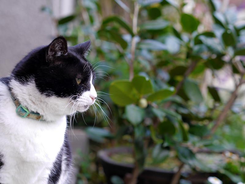 水を飲み終わった黒白猫1