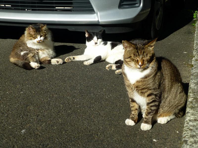 マッタリしている猫たち1