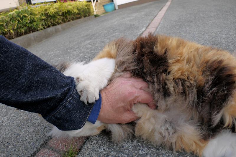 お別れの三毛猫2