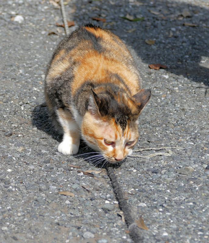 ロープに擦りつける三毛猫2