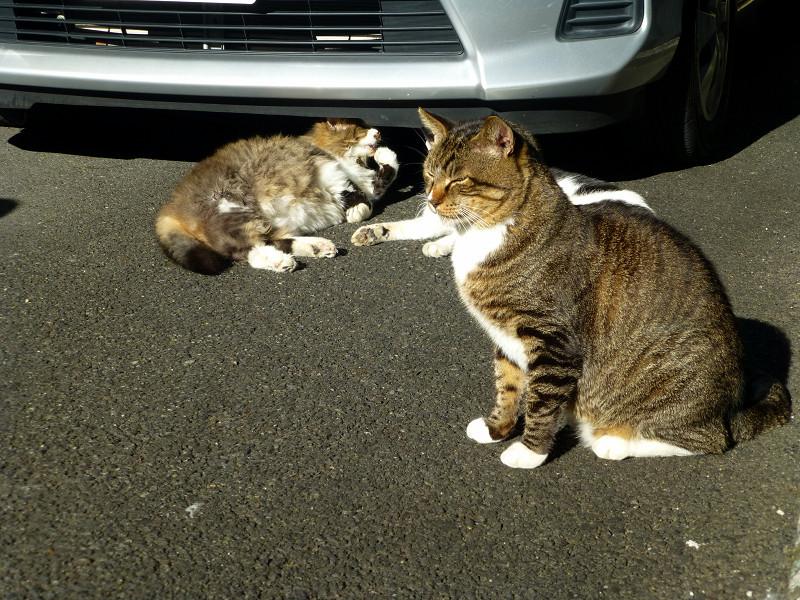 マッタリしている猫たち2