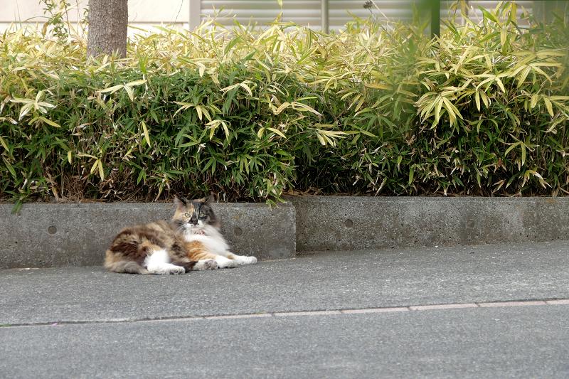 お別れの三毛猫3