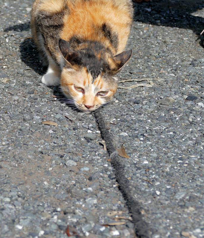 ロープに擦りつける三毛猫3