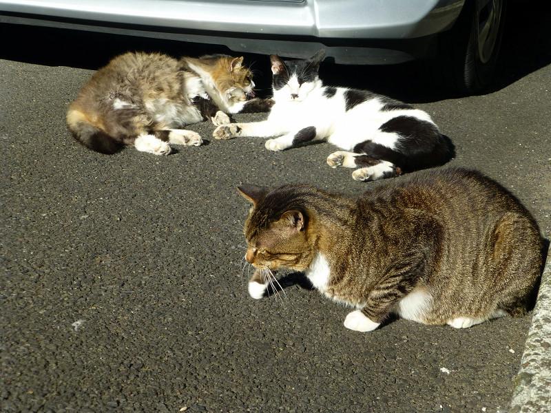 マッタリしている猫たち3