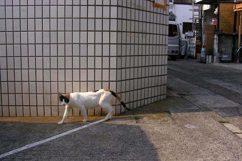 駐車場の猫2匹1