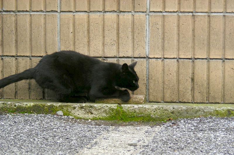 壁と黒猫1