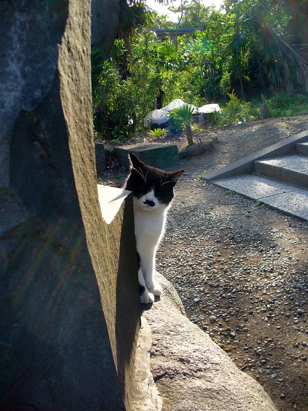 石碑と黒白猫1