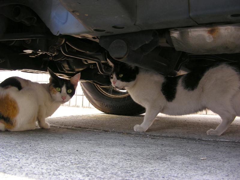 駐車場の猫2匹2