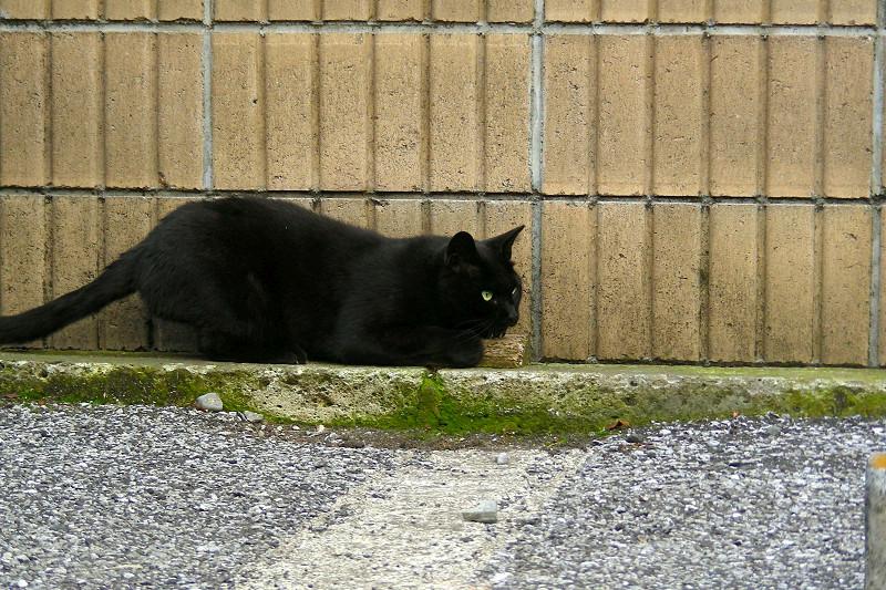 壁と黒猫2