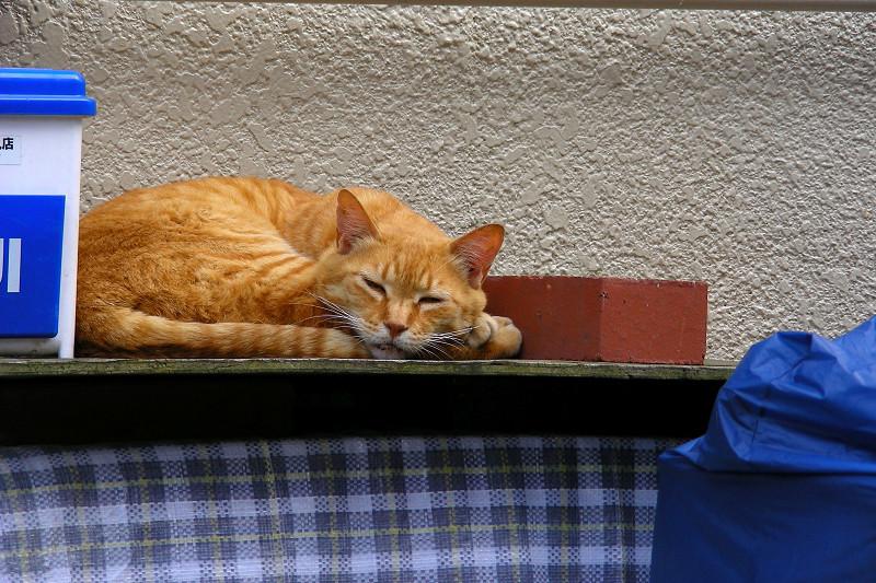 ハウスの上で寝ている茶トラ猫2