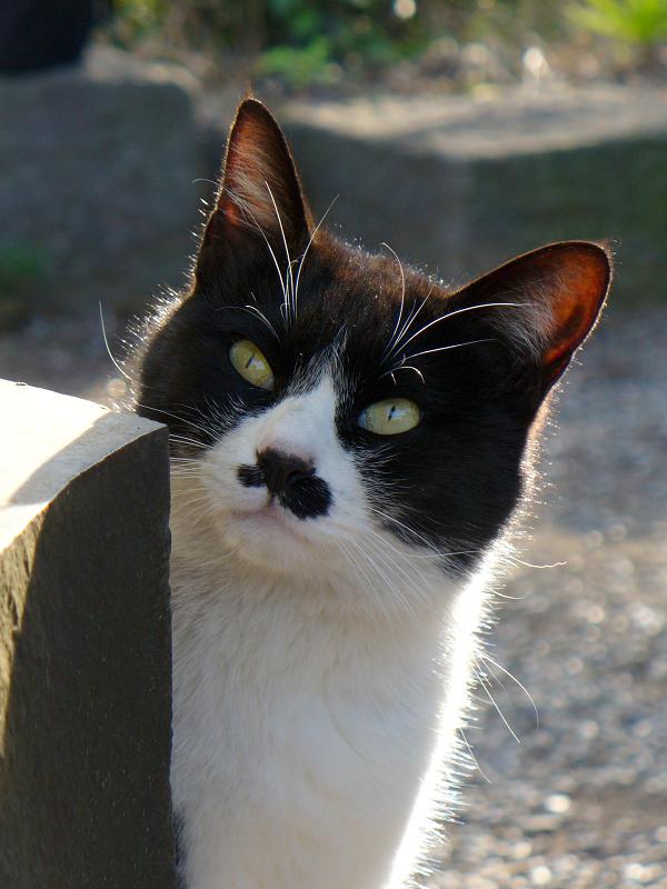 石碑と黒白猫3