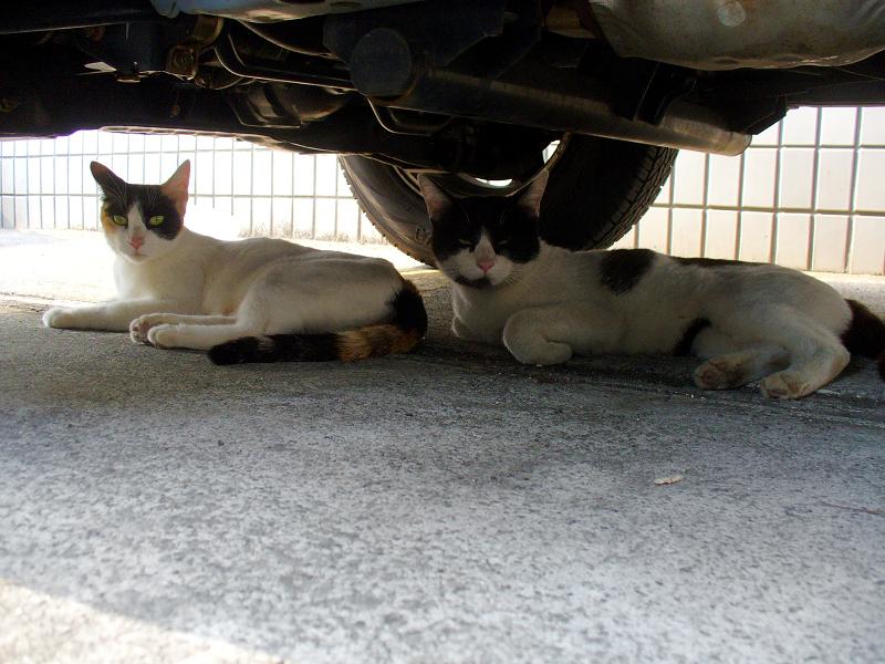 駐車場の猫2匹3