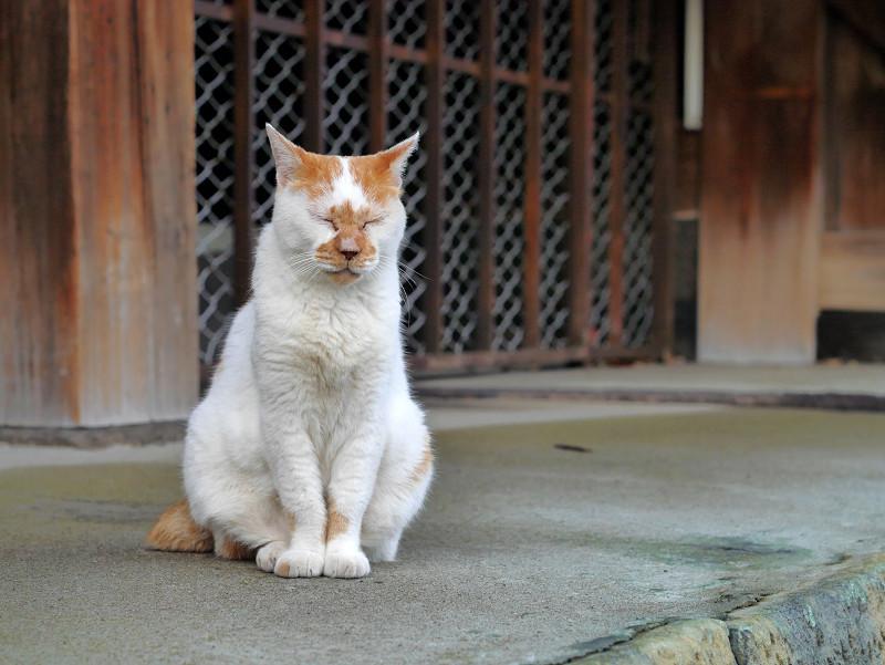 目を閉じている白茶猫