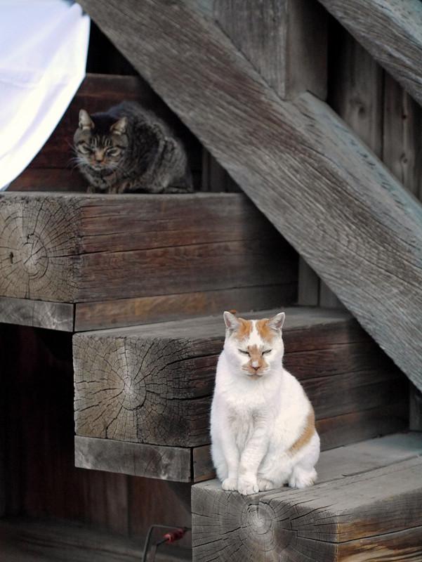 階段の端に座る猫2匹1