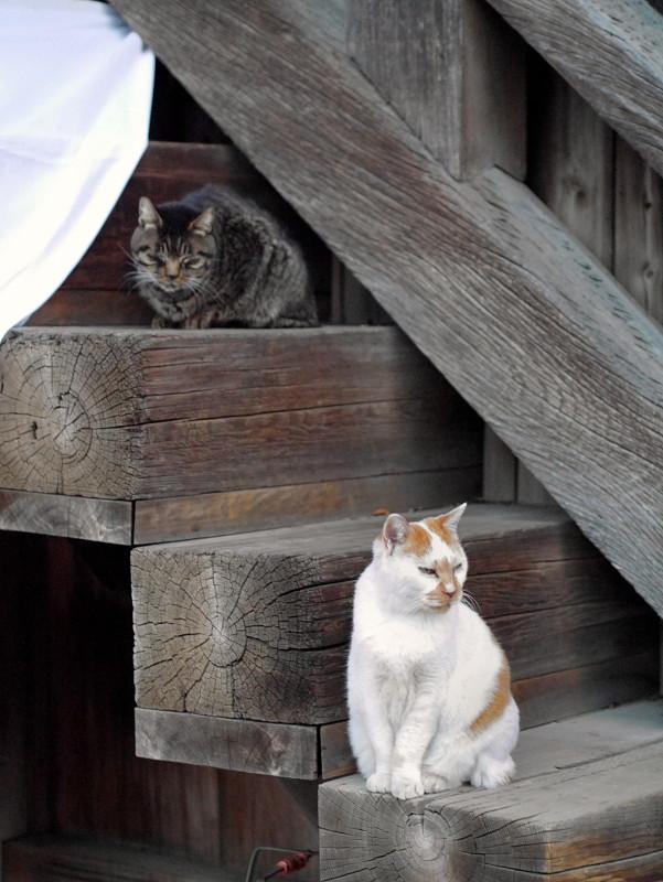 階段の端に座る猫2匹2