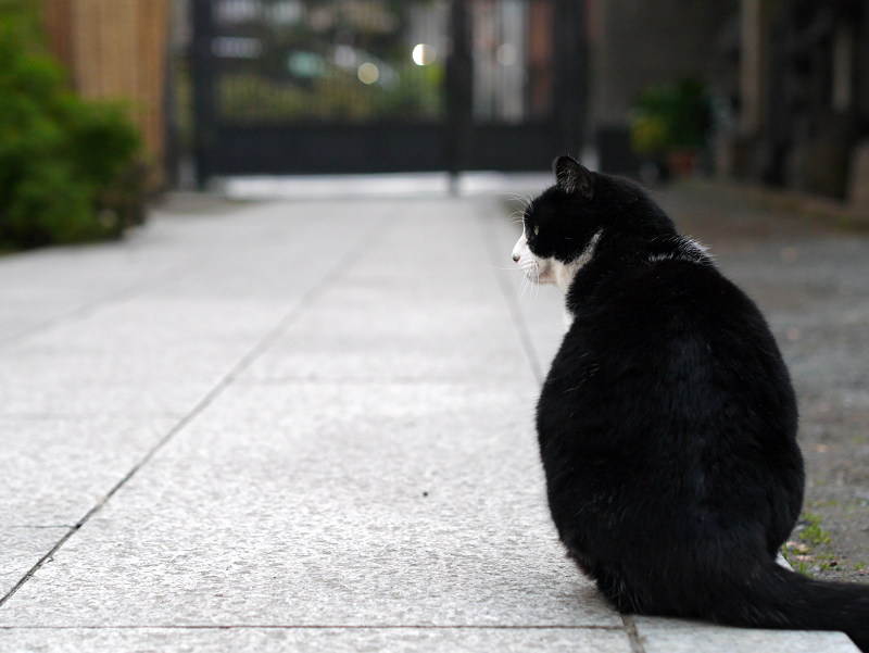 境内を歩く黒白猫3