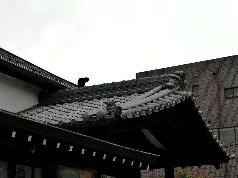 神社屋根上の黒猫1
